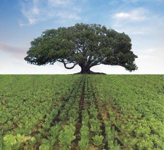 ağaç sevgisi