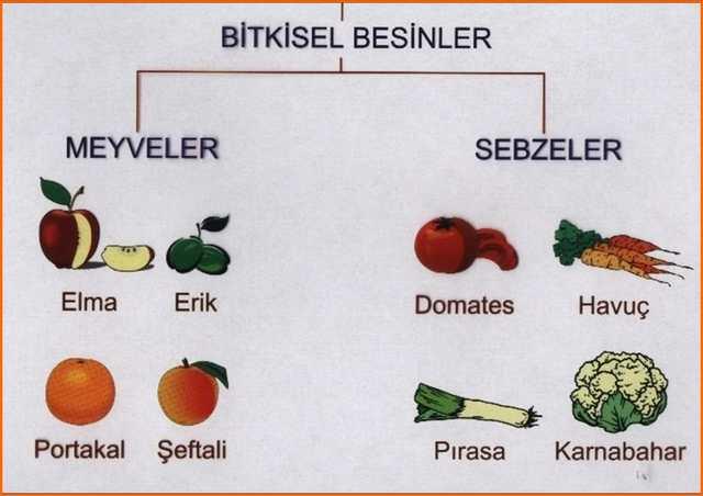 bitkisel besinler