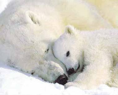 kış uyusuna yatan hayvanlar