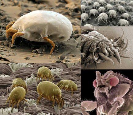 mikroskopik canlılar