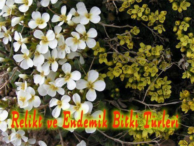 relikt ve endemik bitkiler